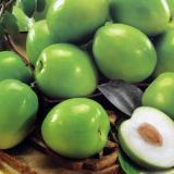 牛奶蜜丝枣供应,牛奶蜜丝枣采购,牛奶蜜丝枣批发,台湾蜜丝枣批发价