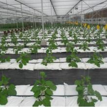 供应袋式基质栽培