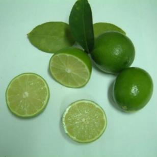 无籽柠檬苗图片