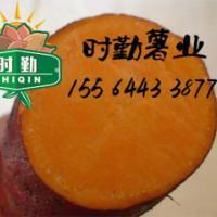供应烟薯25,甘肃批发蜜薯25,烟薯25直供,烟薯25厂家批发