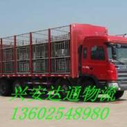 深圳宠物托运热线电话图片