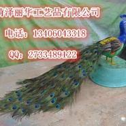 仿真孔雀工艺品羽毛鸟类动物标本图片