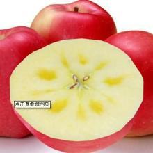 供应新疆红旗坡农场阿克苏冰糖心苹果