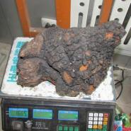 青岛桦褐孔菌供应商图片