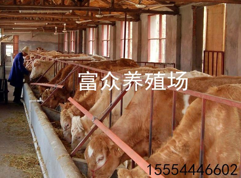 需要牛一天育肥饲料成本报价英国的糕点名牌图片