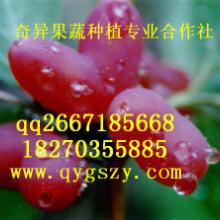 供应全球顶尖水果种苗