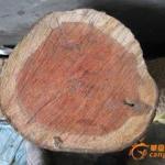 南京木材进口代理手续报价