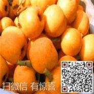 东山白沙枇杷销售图片
