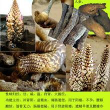 供应用于补火助阳的肉桂提取物天瑞厂家直销100%水溶批发