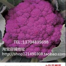 供应奇山特色迪斯特1紫色花椰菜种子应