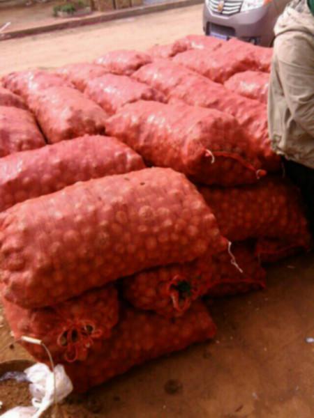供应耿马魔芋种子供应商、耿马子魔芋供应商、耿马花魔芋种子供应商、耿马一代、二代、三代魔芋种子供应商