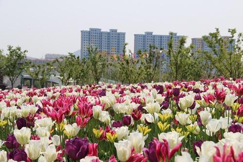 各类广场绿化工程承接_山东哪家广广场绿化工程承接颂