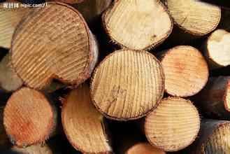 供应用于进口木材的上海木材进口代理报关