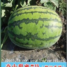 供应奇山甜蜜7号西瓜种子绝对免整枝奇山甜蜜7号西瓜种子