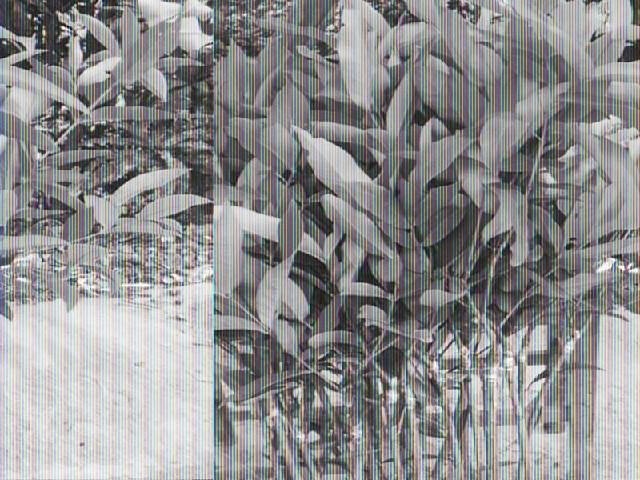 海南果苗:供应海南超值的海南果苗海南果苗蹫